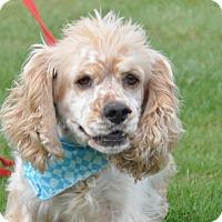 Adopt A Pet :: Logan - Tumwater, WA
