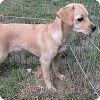 Adopt A Pet :: Valentine - Middletown, RI