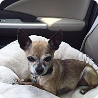 Adopt A Pet :: Cisco - Richmond, VA