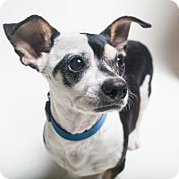 Adopt A Pet :: Chaz and Precious! - Los Angeles, CA