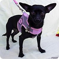 Adopt A Pet :: Lexi - San Marcos, CA