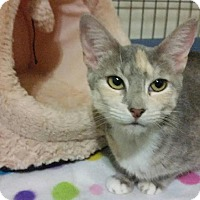 Adopt A Pet :: Liberty - McDonough, GA