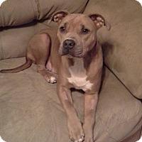 Adopt A Pet :: Petunia - ST LOUIS, MO