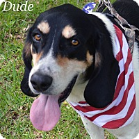 Adopt A Pet :: Dude - Lake Pansoffkee, FL