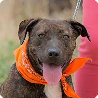 Patterdale Terrier (Fell Terrier)/Retriever (Unknown Type) Mix Dog for adoption in BELL GARDENS, California - MAGGIE