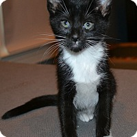 Adopt A Pet :: Stevie - Marietta, GA