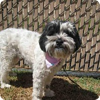 Adopt A Pet :: *MAGGIE - Norco, CA