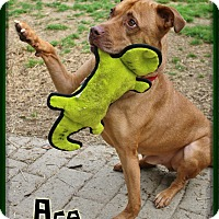 Adopt A Pet :: Ace - Shippenville, PA