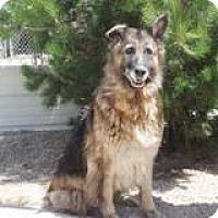 Adopt A Pet :: Kora, cool & calm GSD sweetie! - Snohomish, WA