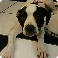 Adopt A Pet :: Letti - Ocoee, FL