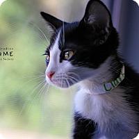 Adopt A Pet :: Clark - Edwardsville, IL