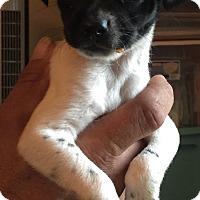 Adopt A Pet :: Lucario - Lancaster, KY