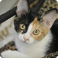 Adopt A Pet :: Ava - San Leon, TX