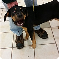 Shepherd (Unknown Type) Mix Dog for adoption in Chippewa Falls, Wisconsin - Clyde