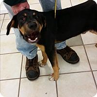 Adopt A Pet :: Clyde - Chippewa Falls, WI