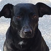 Adopt A Pet :: Jenny - Staunton, VA