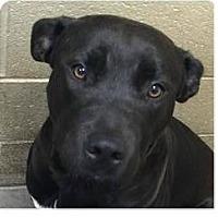Adopt A Pet :: Jake - Springdale, AR