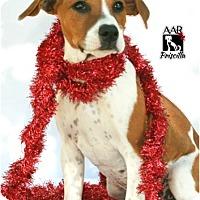 Adopt A Pet :: Priscilla - Tomball, TX