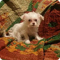 Adopt A Pet :: Mouse - La Verne, CA