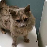 Adopt A Pet :: Cleopatra - Medina, OH
