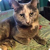 Adopt A Pet :: Vera and Juniper - St. Paul, MN