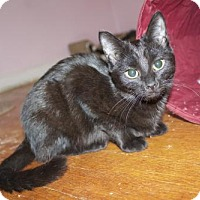 Adopt A Pet :: .Button - Ellicott City, MD