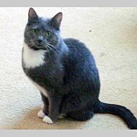 Adopt A Pet :: Tifa - Fishers, IN