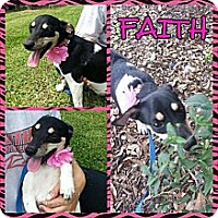 Adopt A Pet :: Faith - Donaldsonville, LA