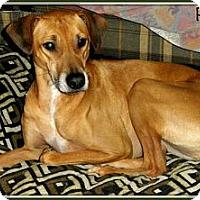 Adopt A Pet :: Peggy - Silsbee, TX