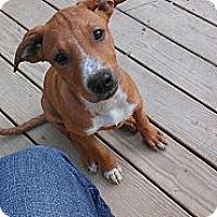 Adopt A Pet :: MIlo - Austin, AR