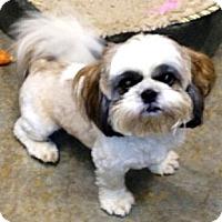 Adopt A Pet :: Prince - Mooy, AL