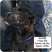 Adopt A Pet :: I.D. # 610-08 - RESCUED! - Zanesville, OH