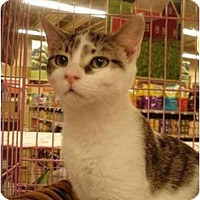 Adopt A Pet :: Valentine - Chesapeake, VA