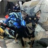 Adopt A Pet :: Freddie - Arlington, TX