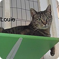 Adopt A Pet :: Louie - Catasauqua, PA