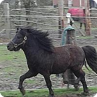 Adopt A Pet :: Fabio - Aumsville, OR