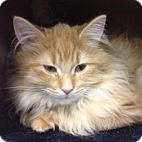Adopt A Pet :: Spice - Byron Center, MI