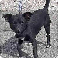 Adopt A Pet :: Alice - Las Vegas, NV