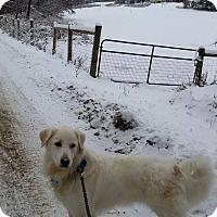 Adopt A Pet :: Pogo - adopted! - Ascutney, VT