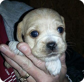 Small Rescue Dogs In Buffalo Ny