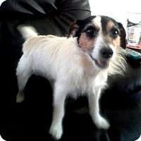 Adopt A Pet :: BRIANNA - ADOPTED! - Terra Ceia, FL
