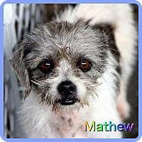 Adopt A Pet :: Mathew - Hollywood, FL