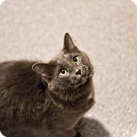 Adopt A Pet :: Jamaica - Lincoln, NE