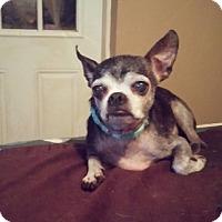 Adopt A Pet :: Emilio - Brooksville, FL