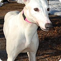 Adopt A Pet :: Nashville Girl - Cherry Hill, NJ