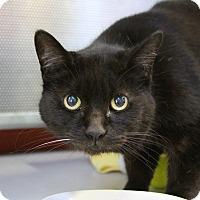 Adopt A Pet :: Madison - Sarasota, FL
