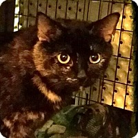 Adopt A Pet :: Amara - Lexington, KY