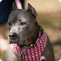 Adopt A Pet :: Joanna - Snellville, GA