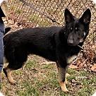 Adopt A Pet :: Princess 4443