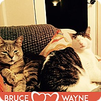 Adopt A Pet :: Bruce and Wayne - Oakland, CA